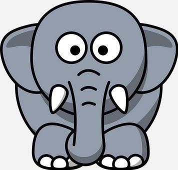 elephants have good memories